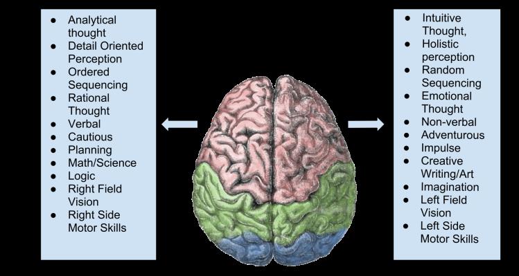 Brain_Lateralization-1.svg