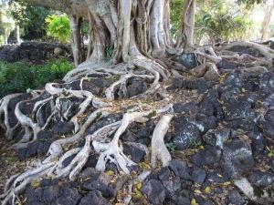 lilipark-tree-roots