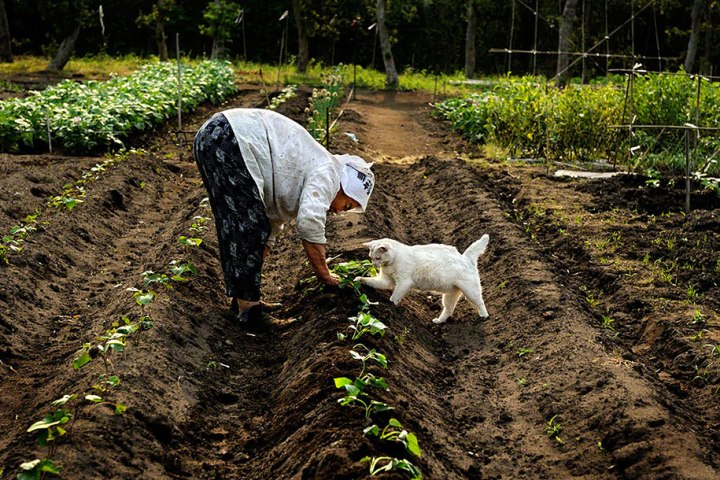 grandmother-and-cat-miyoko-ihara-fukumaru-14