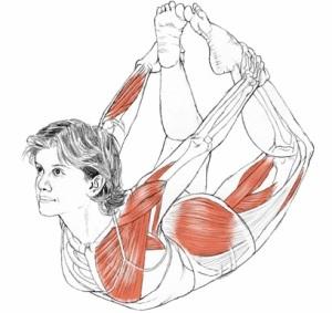 Yoga Anatomy Dhanurasana
